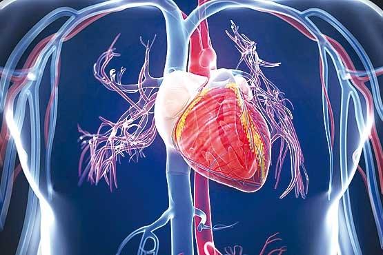 بیولوژیک قلب   فنگ شویی ایران